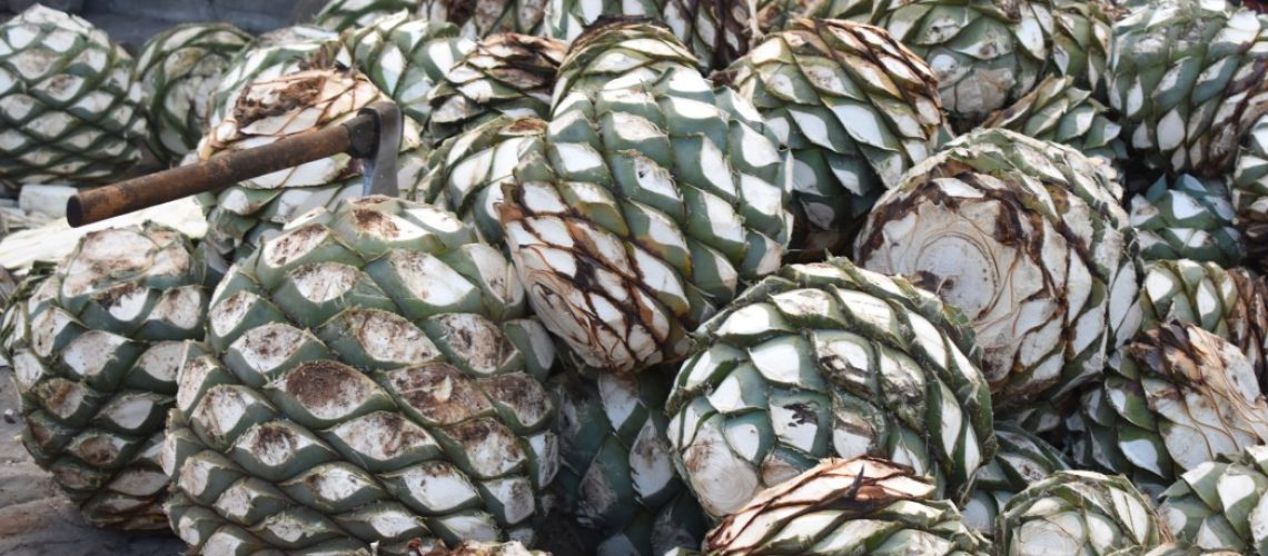 mezcal-is-an-alcoholic-beverage-obtained-by-artisan-fermentation-and-distilling-of-sugars-obtained_t20_joYbva (1)